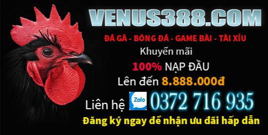 venus388